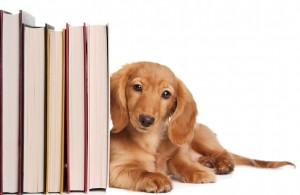 Book end puppy