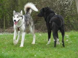Hundeschule Mosbach/Hundeschule Öhringen