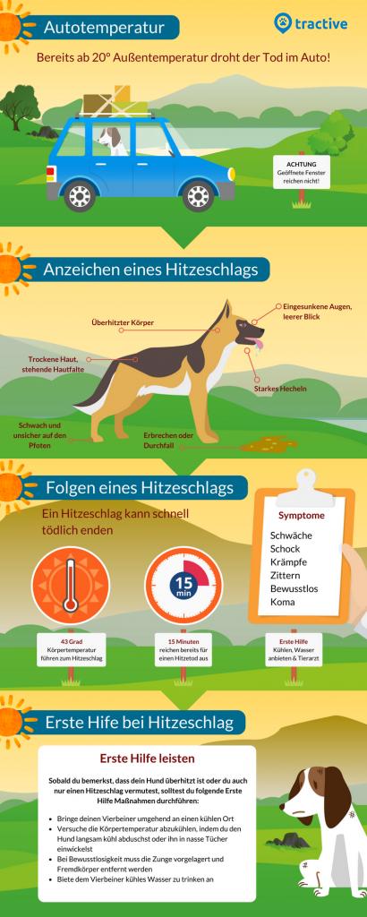 verhalten-bei-einem-hitzeschlag-beim-hund-sofortmaßnahmen-und-symptome